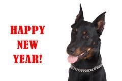 Cabeza de perro francesa con la lengua que cuelga hacia fuera y ` de la Feliz Año Nuevo del ` de la inscripción en fondo negro Fotos de archivo libres de regalías