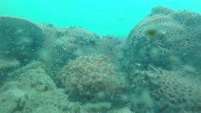 Cabeza de pescados en agua almacen de metraje de vídeo