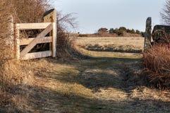 Cabeza de rastro del pantano Imagen de archivo libre de regalías