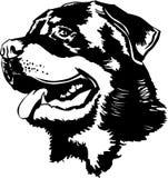 Cabeza de Rottweiler ilustración del vector