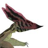 Cabeza de Thalassodromeus Pterosaur Fotografía de archivo