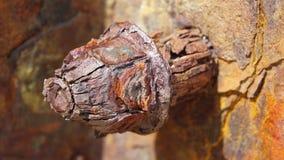 Cabeza de tornillo corroída Imagen de archivo