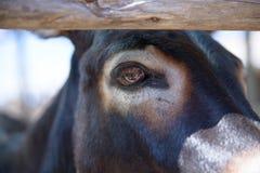 Cabeza de un burro Fotos de archivo