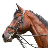 Cabeza de un caballo Imagenes de archivo