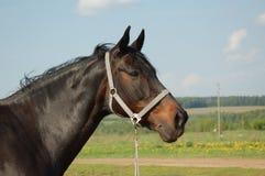 Cabeza de un caballo Imagen de archivo