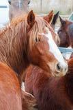 Cabeza de un caballo Imágenes de archivo libres de regalías