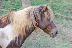 Cabeza de un caballo marrón con la hierba Imagen de archivo