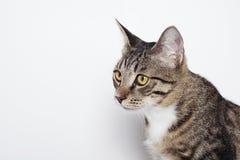 Cabeza de un gato Foto de archivo