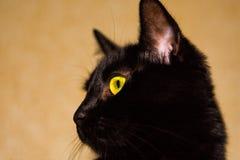 Cabeza de un gato negro en un fondo del papel pintado brillante fotografía de archivo