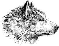 Cabeza de un perro Foto de archivo libre de regalías