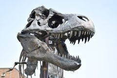 Cabeza del bronxe de Tyrannosarus Rex fuera del museo Fotografía de archivo
