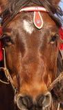 Cabeza del caballo de Montenegrian Fotografía de archivo