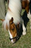 Cabeza del caballo marrón Foto de archivo libre de regalías