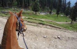 Cabeza del caballo marrón Fotografía de archivo libre de regalías