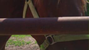 Cabeza del caballo marrón detrás de la cerca del hierro, primer Caballo hermoso, arnés, bozal del caballo Nubes en escena rural d metrajes