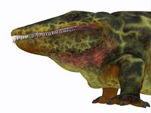 Cabeza del dinosaurio de Eryops Fotografía de archivo libre de regalías