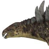 Cabeza del dinosaurio de Hungarosaurus Imagen de archivo libre de regalías