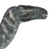Cabeza del dinosaurio de Iguanodon Imagen de archivo libre de regalías
