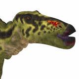 Cabeza del dinosaurio de Shantungosaurus Imagen de archivo libre de regalías