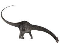 Cabeza del dinosaurio del Diplodocus abajo - 3D rinden Imagen de archivo libre de regalías