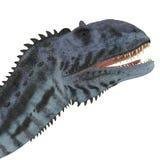 Cabeza del dinosaurio del Majungasaurus Imágenes de archivo libres de regalías