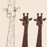 Cabeza del ejemplo del vector de una jirafa Objetos en blanco Fotos de archivo