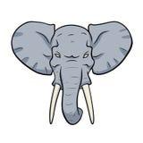 Cabeza del elefante Imagenes de archivo