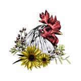 Cabeza del gallo en perfil con la guirnalda bajo la forma de marco de las hojas del girasol y de la hierba seca de debajo Imagen de archivo libre de regalías
