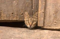 Cabeza del gato en Kairouan fotografía de archivo libre de regalías