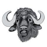 Cabeza del ` s del búfalo Ilustración del vector en el fondo blanco Foto de archivo libre de regalías