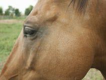 Cabeza del ` s del caballo Imágenes de archivo libres de regalías