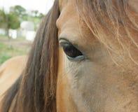 Cabeza del ` s del caballo Fotografía de archivo libre de regalías