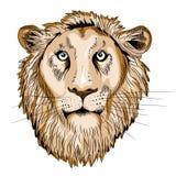 Cabeza del ` s del león Ilustración del vector en el fondo blanco Imágenes de archivo libres de regalías
