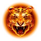 Cabeza del tigre del fuego Imágenes de archivo libres de regalías
