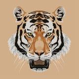 Cabeza del tigre en vector marrón del fondo Imágenes de archivo libres de regalías