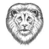 Cabeza dibujada mano del león stock de ilustración