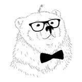 Cabeza dibujada mano del oso del ejemplo del vector Imágenes de archivo libres de regalías