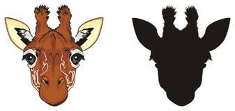 Cabeza dos de jirafas Fotos de archivo