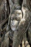 Cabeza en raíces del árbol, Wat Mahathat, Ayutthaya, Tailandia de Buda fotografía de archivo