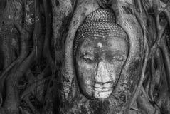 Cabeza en raíz del árbol, Wat Mahathat, Ayutthaya de Buda foto de archivo libre de regalías