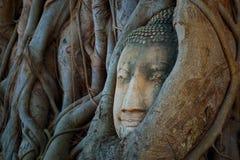 Cabeza famosa de Buda con la raíz del baniano en Wat Mahathat Temple en el parque histórico de Ayuthaya Imagenes de archivo