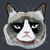 Cabeza gruñona del gato Fotografía de archivo