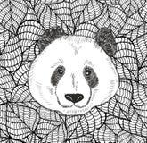 Cabeza linda de la panda del oso del chino Imagenes de archivo