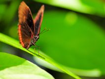 Cabeza macra de la mariposa Imágenes de archivo libres de regalías