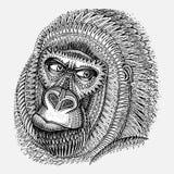 Cabeza modelada del gorila en estilo gráfico stock de ilustración