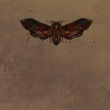 Cabeza muerta de la mariposa en acuarela Imagen de archivo