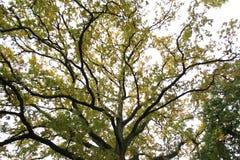 Cabeza Reino Unido de Stour de las ramas de árbol imagen de archivo