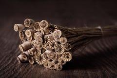 Cabeza seca de la amapola en fondo de madera Foto de archivo