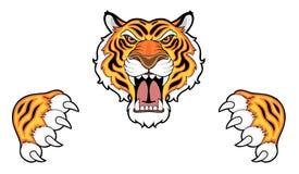 Cabeza y garras del tigre Fotografía de archivo