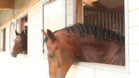 Cabezas de caballo almacen de metraje de vídeo